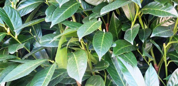Få rabat når du køber hækplanter